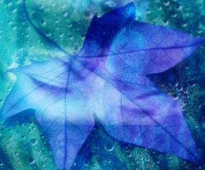 leaf under blue water