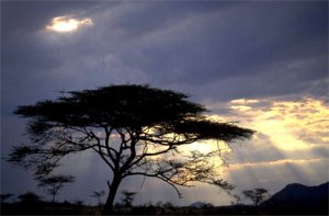 Tree under clouds and sunbeams
